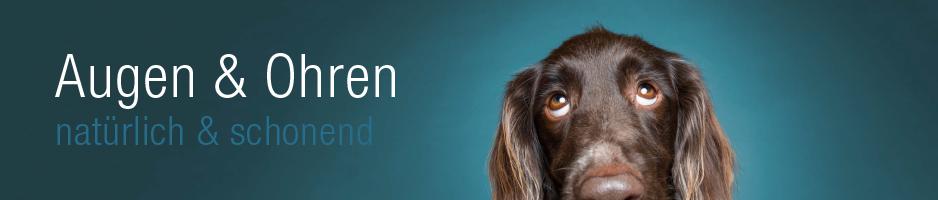 Gesundheit-Hundeaugen und Hundeohren