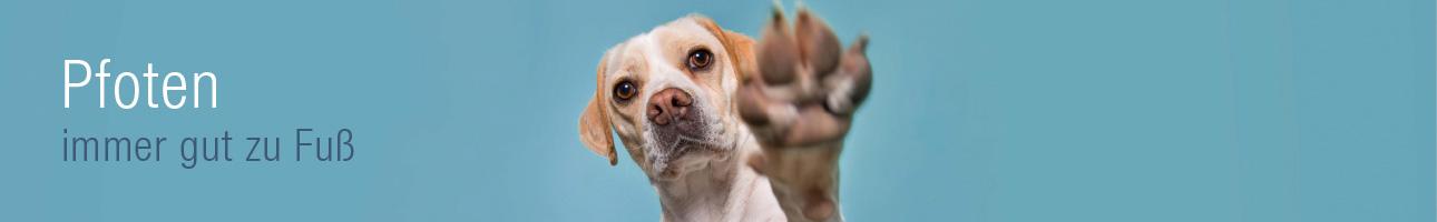 Pfotenpflege Hund